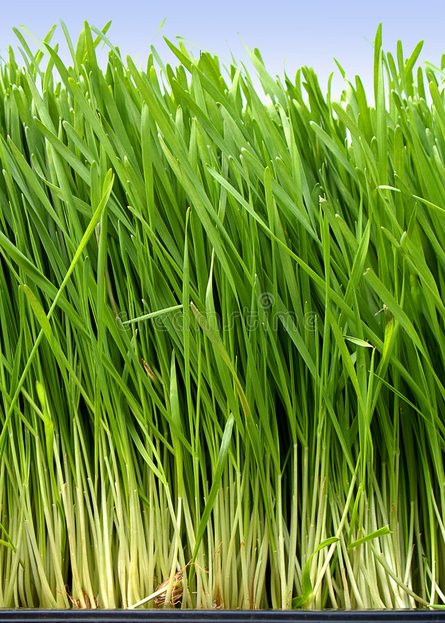 Download Grass stock image. Image of fresh, nature, long, growing - 1700411