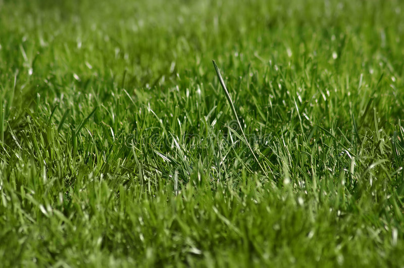 Download Grass Stock Photo - Image: 177840