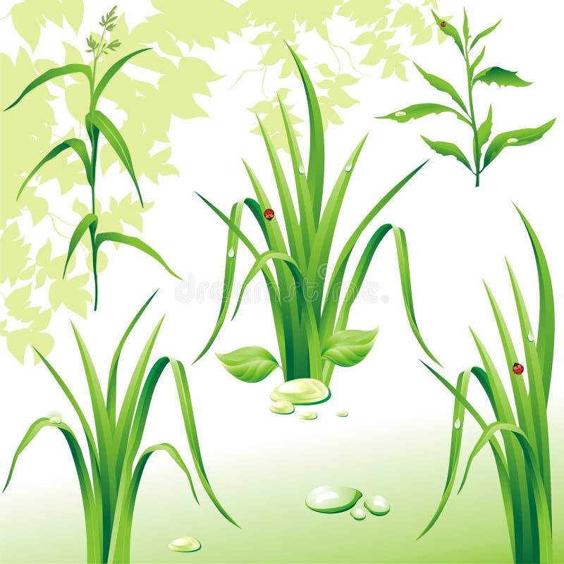 Download Grass. stock vector. Illustration of natural, garden - 18305180