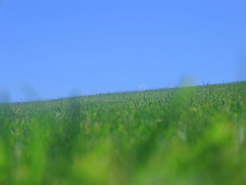 Download Grass stock image. Image of pretty, summer, sunny, blue - 185031