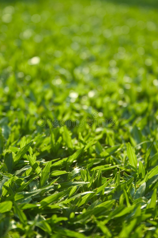 Download Grass stock image. Image of growth, lush, grow, fertile - 199669
