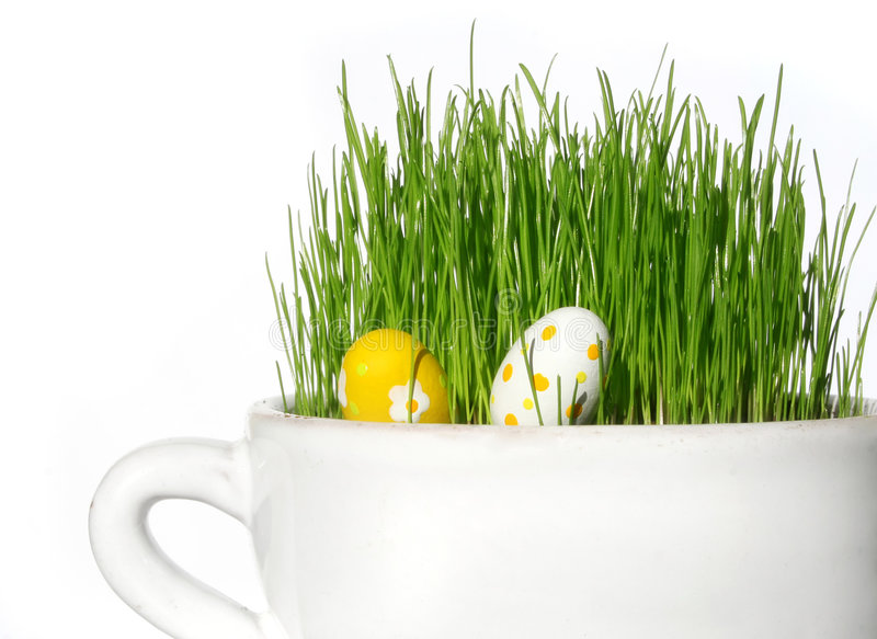 Grass. Easter grass in a pot stock photos