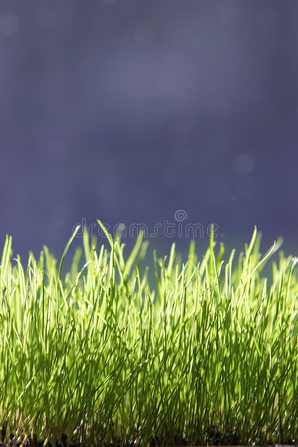 Free Grass Royalty Free Stock Images - 21639