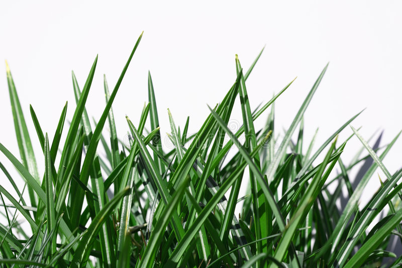 Download Grass stock image. Image of white, freshness, grass, detail - 2240003