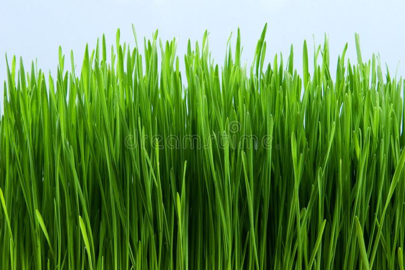 Download Grass stock photo. Image of plant, blade, green, garden - 2305784
