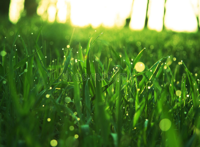 Download Grass stock image. Image of garden, october, light, grass - 2309089