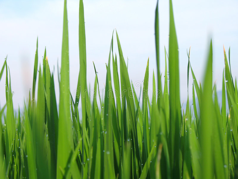Download Grass stock image. Image of leaf, background, morning - 2346187