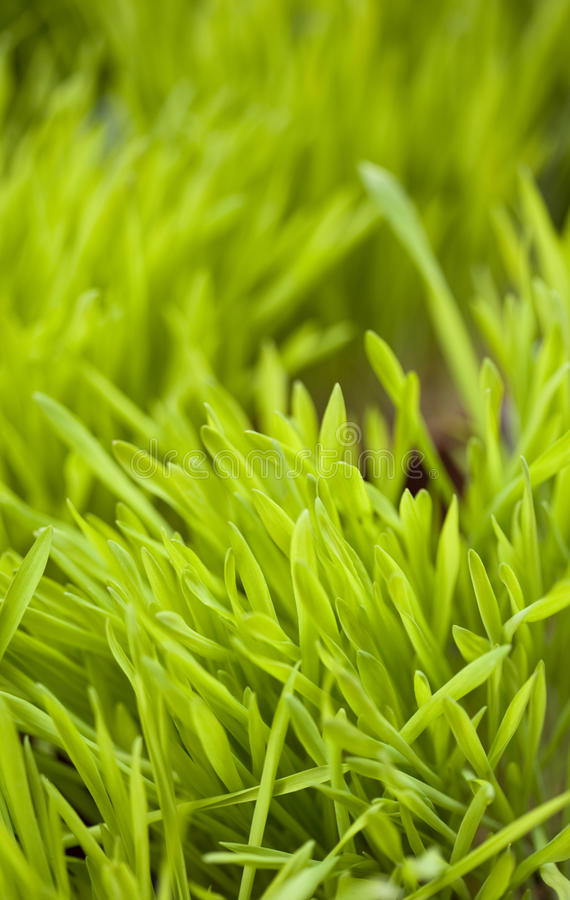 Download Grass stock photo. Image of herb, vegetation, natural - 23613876