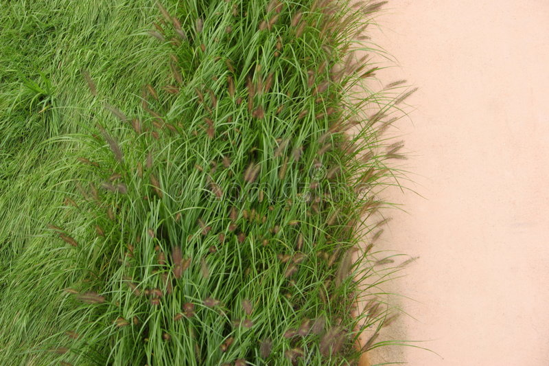 Grass. Blowing in the wind royalty free stock photos