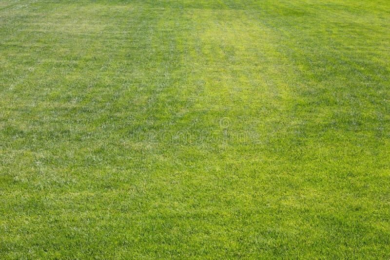 Grass. Green grass textured in a neighborhood park stock image