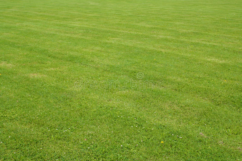 Download Grass stock image. Image of plant, field, fresh, grass - 25665297