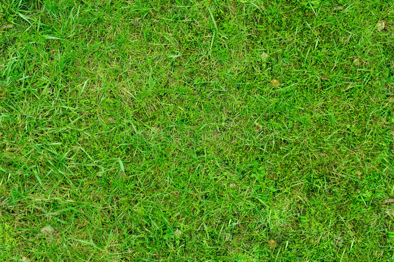 Grass 3. Juicy green grass seamless texture background stock photos