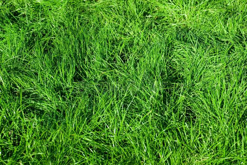 Grass. Fresh green grass for background royalty free stock image