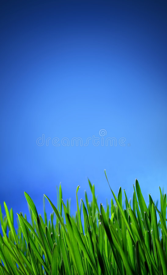 Download Grass stock photo. Image of horizon, field, clear, freshness - 3116024