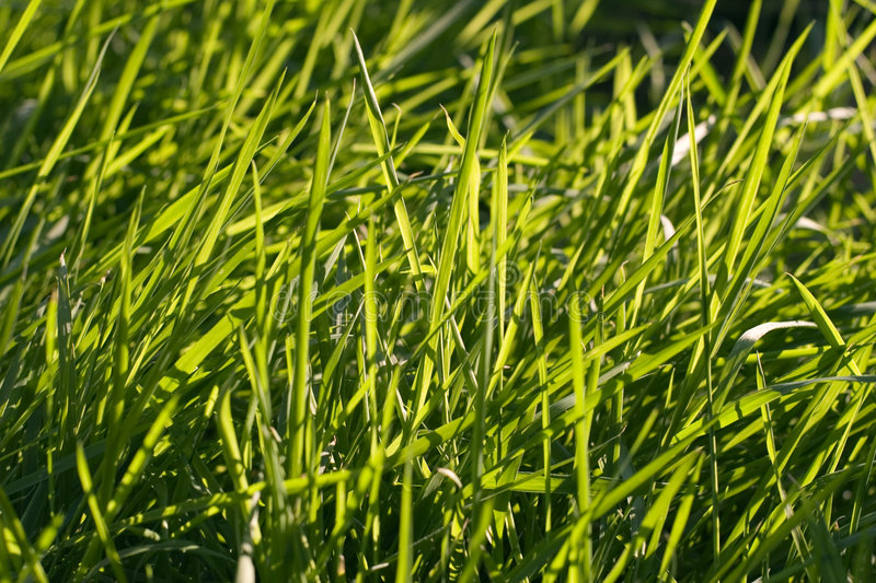 Grass stock photography