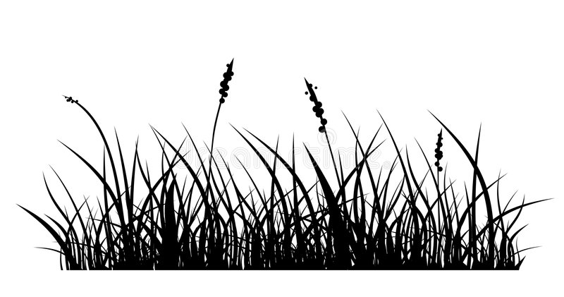 Grass. Vector silhouette of grass on white background