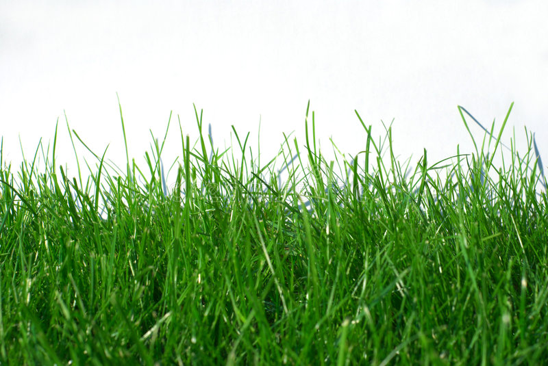 Download Grass stock image. Image of plant, summer, freshness, mowing - 4212433
