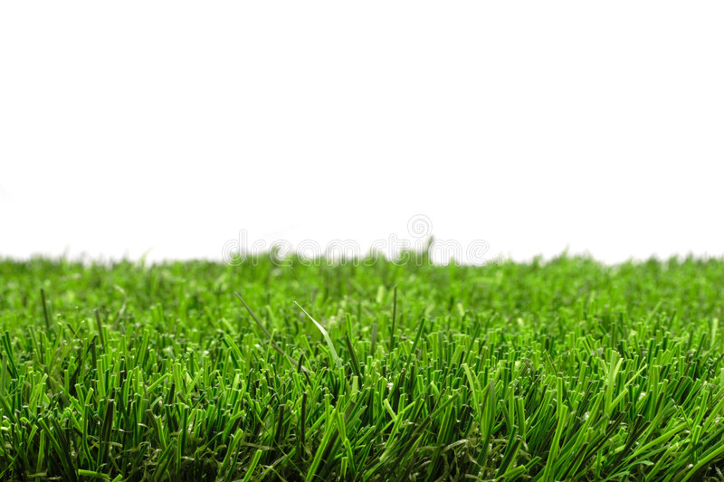 Download Grass stock photo. Image of plant, meadow, isolated, white - 4631074