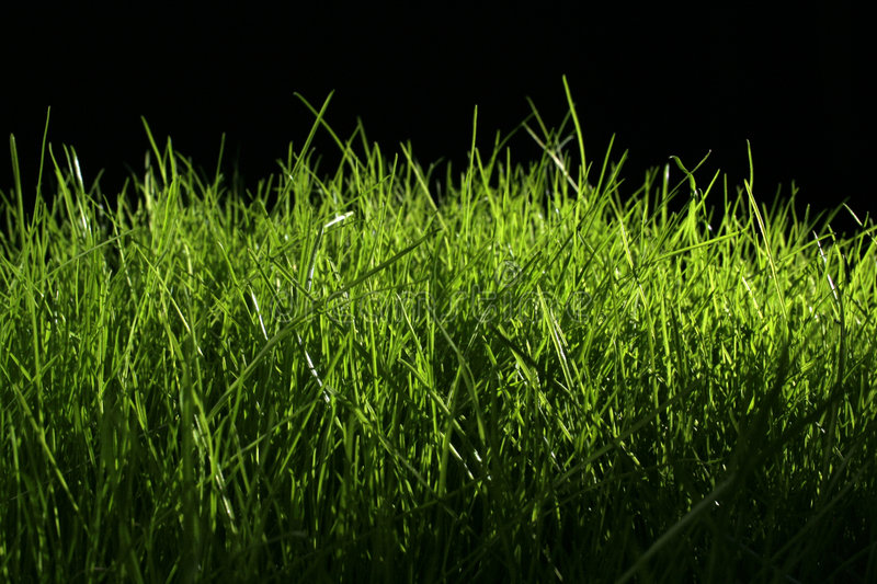 Download Grass Stock Photo - Image: 4885870