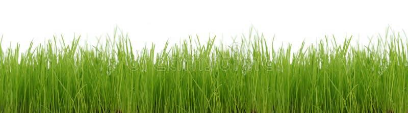 Grass. Green grass