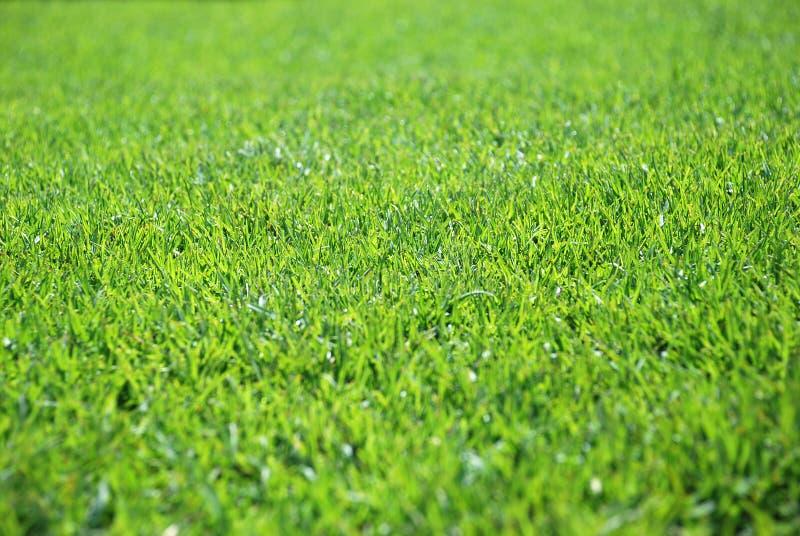 Grass. Green grass background like texture