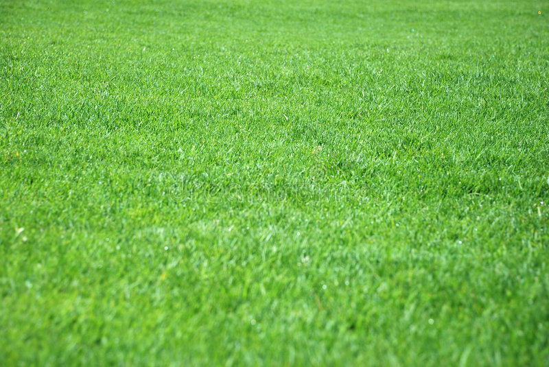 Grass Stock Images - Download 4,336,634 Royalty Free Photos