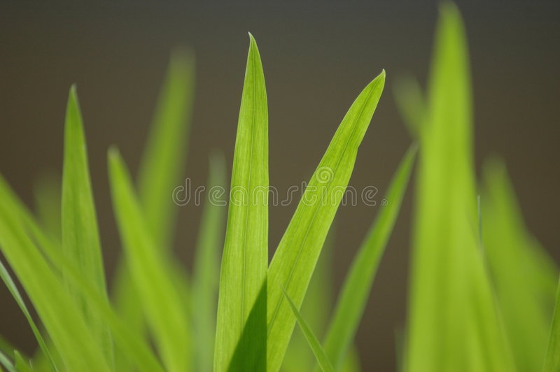 Download Grass stock image. Image of laid, garden, grass, grow, plant - 70591