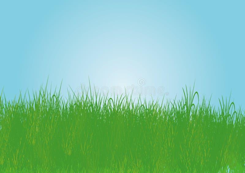 Download Grass stock illustration. Image of image, closeup, environment - 7843361