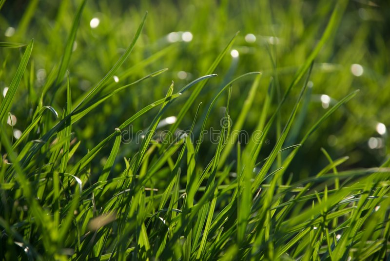 Download Grass stock photo. Image of summer, closeup, macro, morning - 9061344