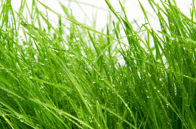 Download Grass stock image. Image of white, bright, land, growth - 9140391