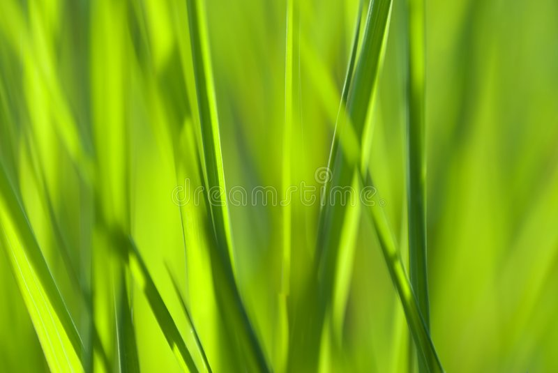 Grass abstract stock photo