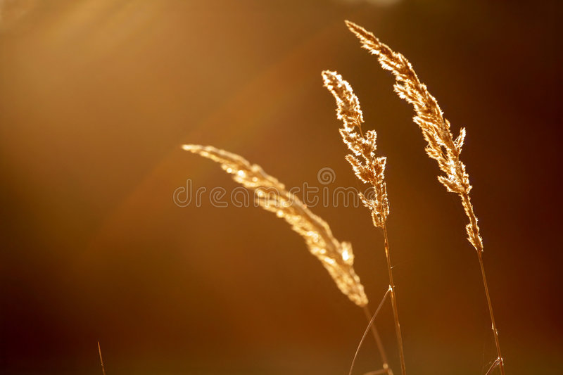 Grass - abstract stock image