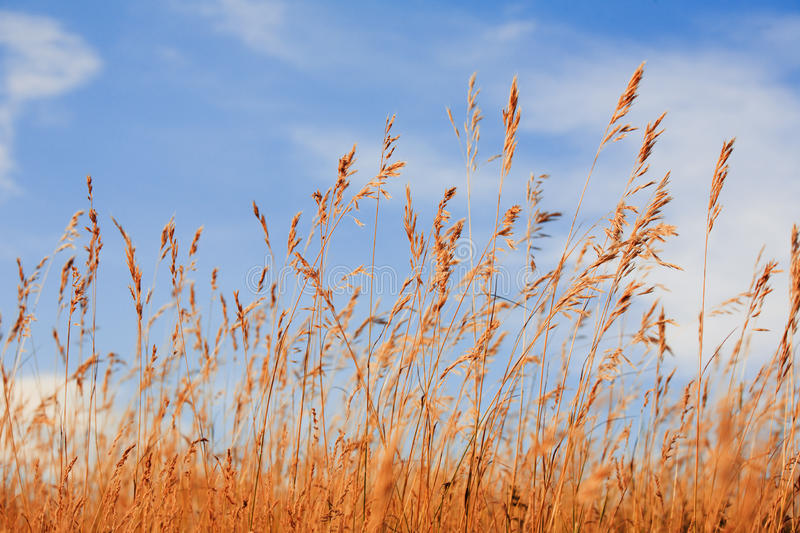 Grass against blue sky royalty free stock image