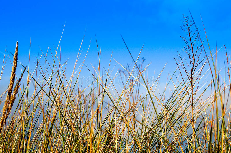 Grass against a blue sky stock photo