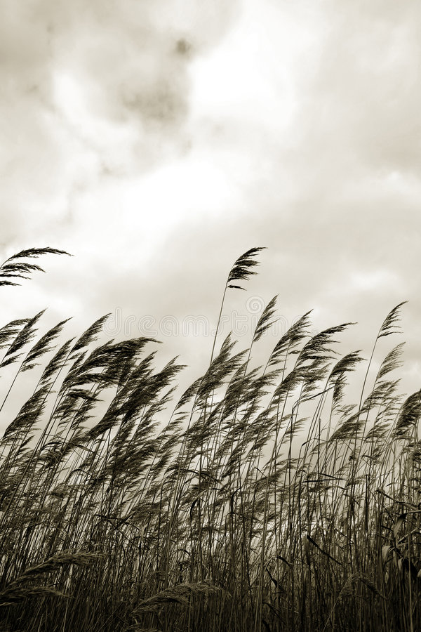 Free Grass Against Sky In Sepia Stock Images - 1205014