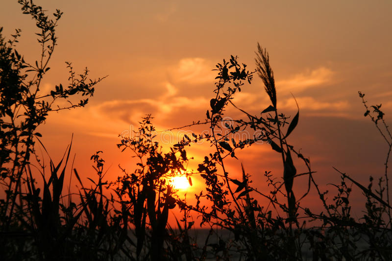 Grass against the sunset sky royalty free stock photography