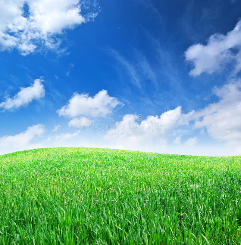 Free Grass And Deep Blue Sky Royalty Free Stock Photo - 14878775