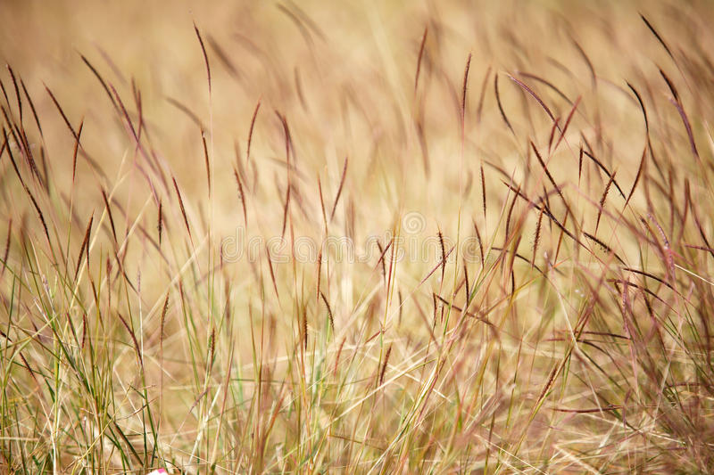 Grass as a nice background royalty free stock photo