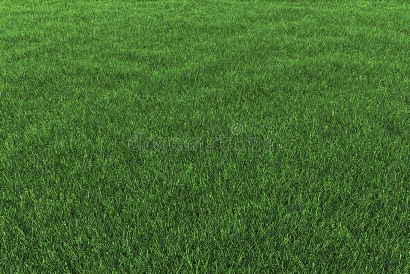 Download Grass background stock illustration. Image of natural - 21379889