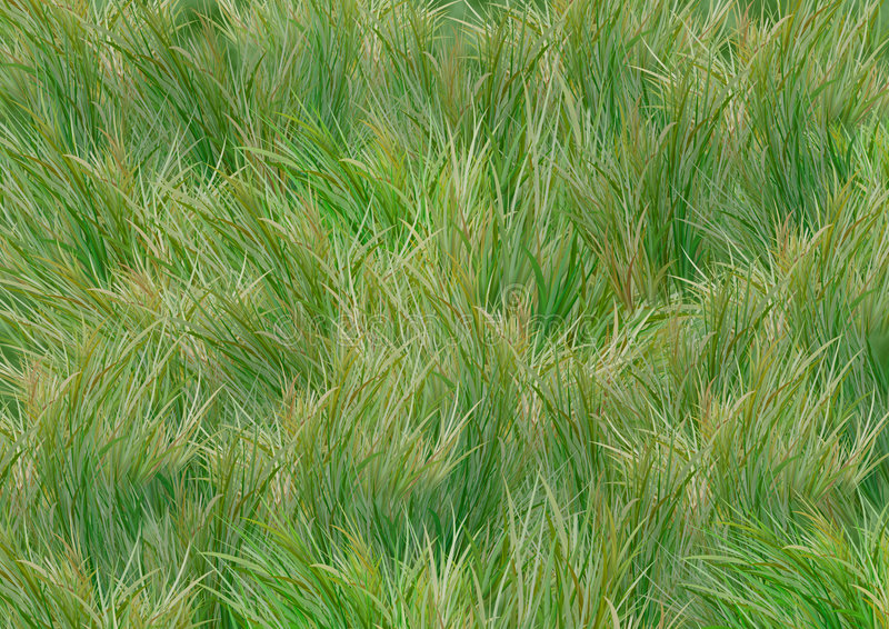 Download Grass background stock vector. Image of texture, close - 6706124