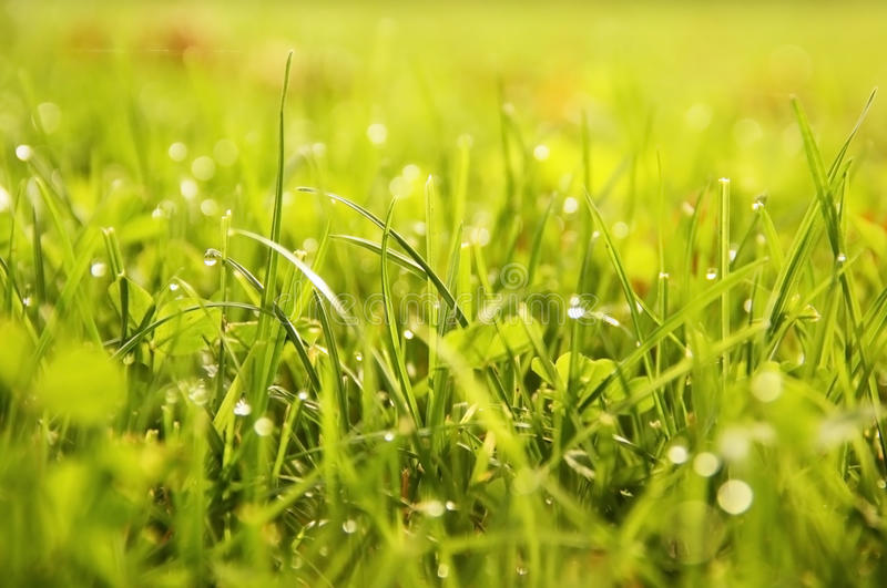 Download Grass background stock image. Image of easter, flora - 34464937