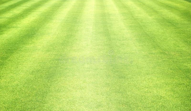 Grass background Golf Courses green lawn royalty free stock photo