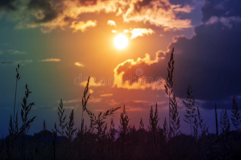 Grass background on the summer sunset . Bright natural bokeh. Soft focus. Abstract nature background stock image
