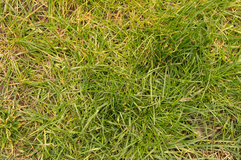Grass background from top view. Texture royalty free stock photos
