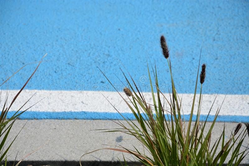 Grass on the beach. Green grass on the beach royalty free stock image