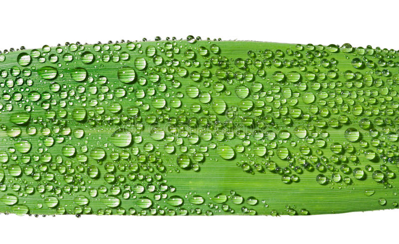 Download Grass-blade With Dew 1 Royalty Free Stock Photos - Image: 12087848