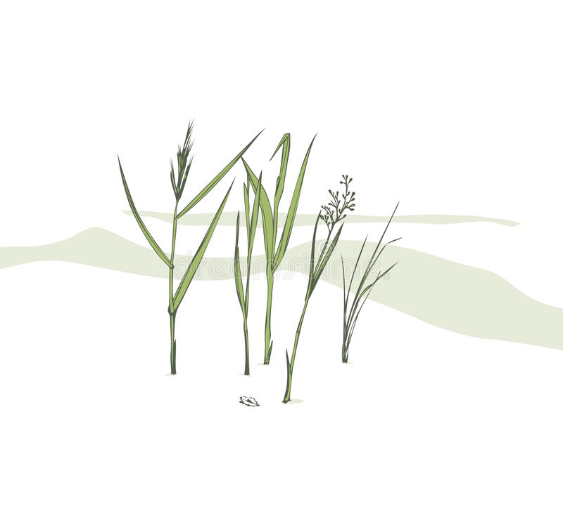 Free Grass Blades Stock Photography - 11231042