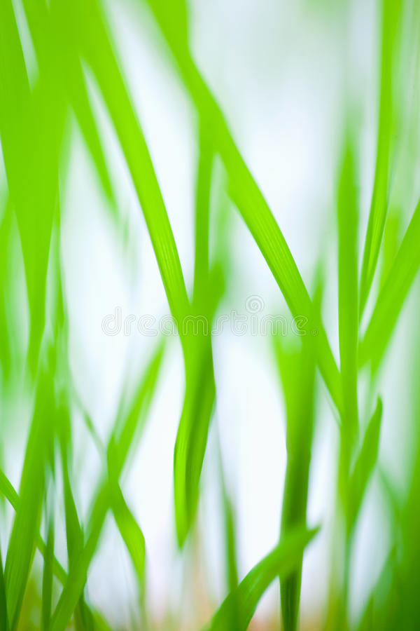 Grass blades abstract