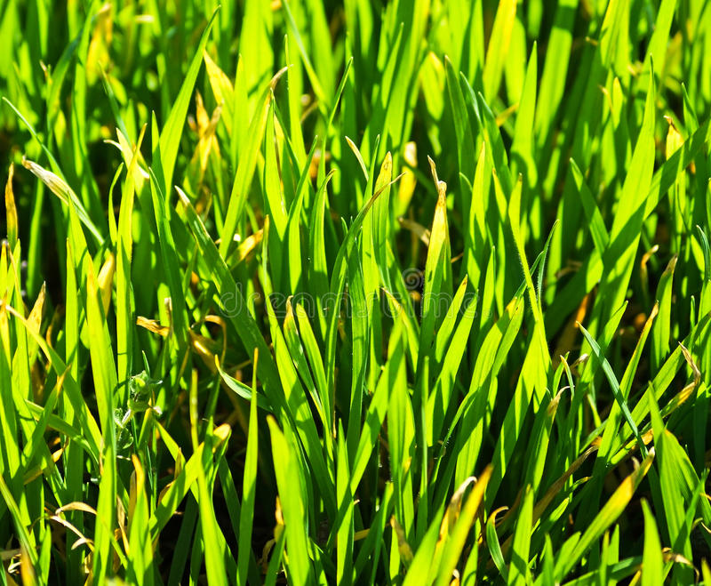 Grass blades close up stock image Image of outdoors 61157677