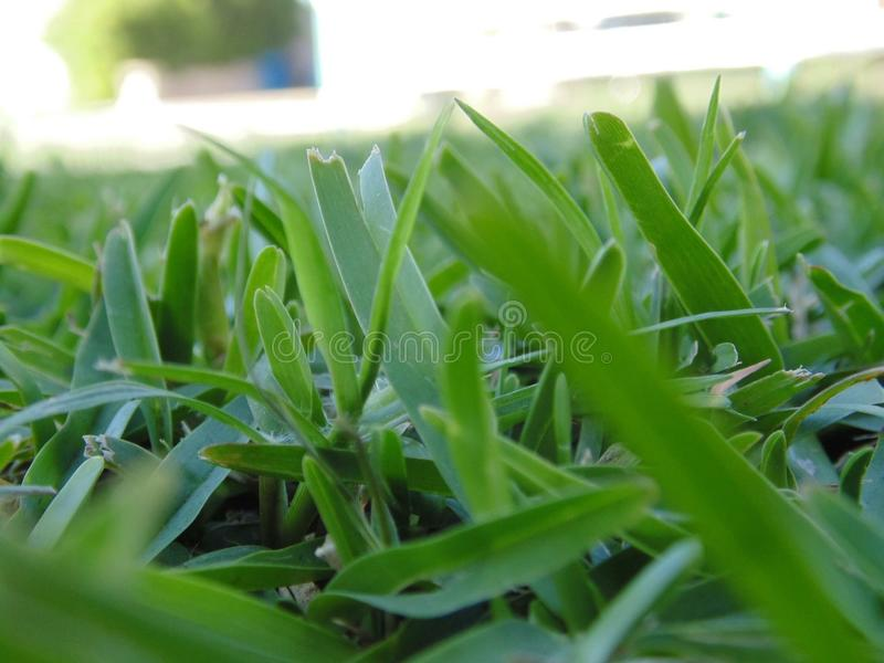 Grass blades stock photography